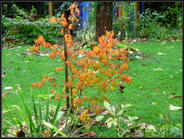 l'automne arrive... - Page 5 840645tuxpicom1415214381