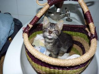 Cerise chaton / Adoptée 842234cerise004Copier