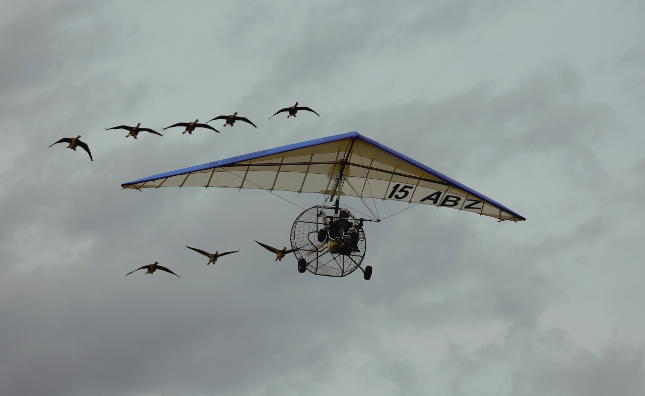Aérodrome de Pierrelatte 26700. 843753LesOies0458