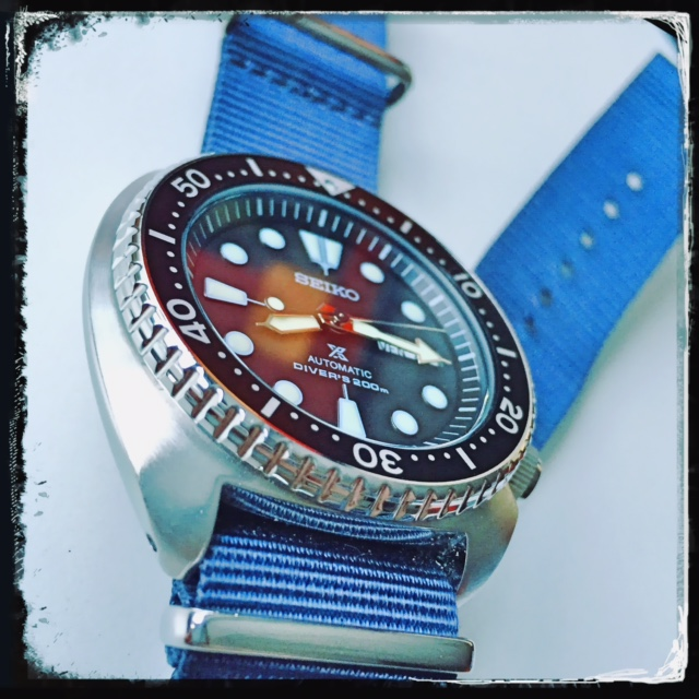 La montre du vendredi, le TGIF watch! - Page 19 849018TurtleSRP77710