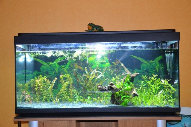 Je vous présente mon aquarium! =D 849696Aquariumvolution