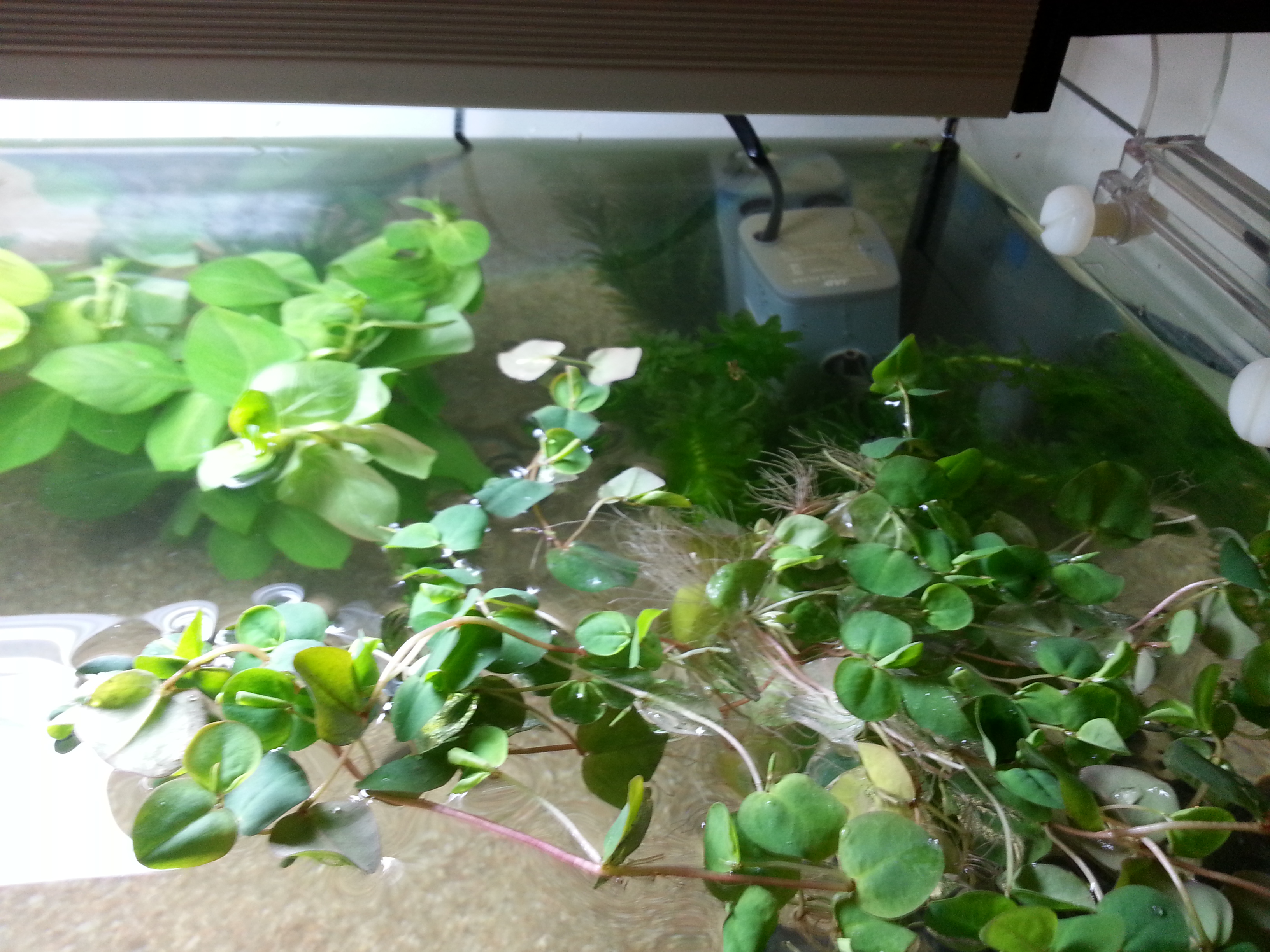 plante dans un aquarium 85002120130613003132