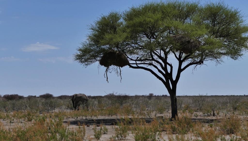 NAMIBIE voyage en groupe du 08/11 au 24/11/2016 - Page 3 853578P1140996