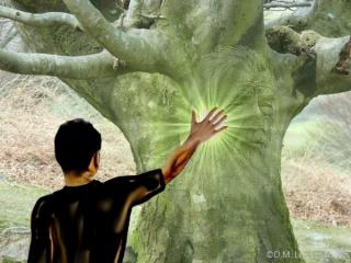 L'esprit des arbres 856509arbre1