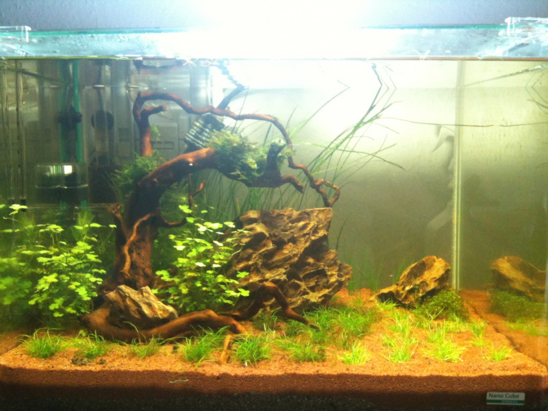 Mon Scaper's Tank 50L Aquascaping 858763IMG0306