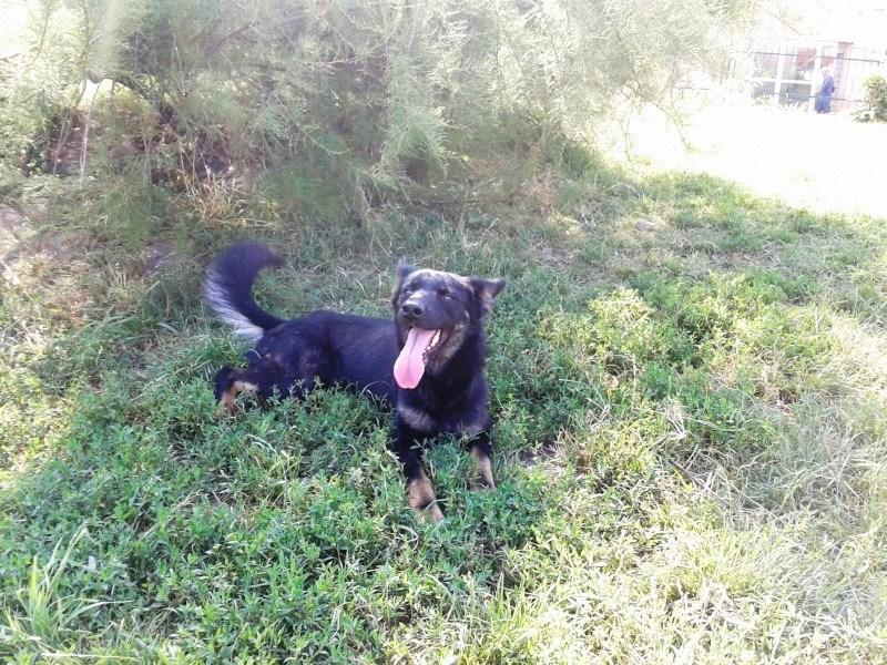 > Mika, un amour de petite chienne, née en mai 2011 - Adoptée 8604502012016