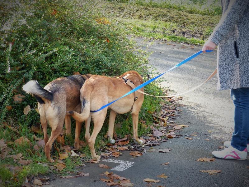Tzupy, chien de notre quartier, mâle très sociable, né en 2009. 863039P1130394