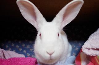 Les lapins du Bazar des NAC [MAJ 26/05/16 865461aria