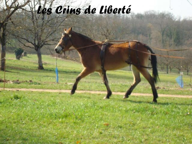 (Dep 63) HOLIDAY (dcd) et VIOLETTE, ponettes sauvées par Sonia R !!! (Fév et août 2012) 870669Ponette5