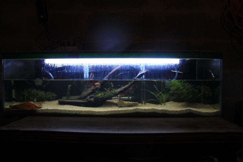 aquarium  100l pour mes femelles 874507ebay012