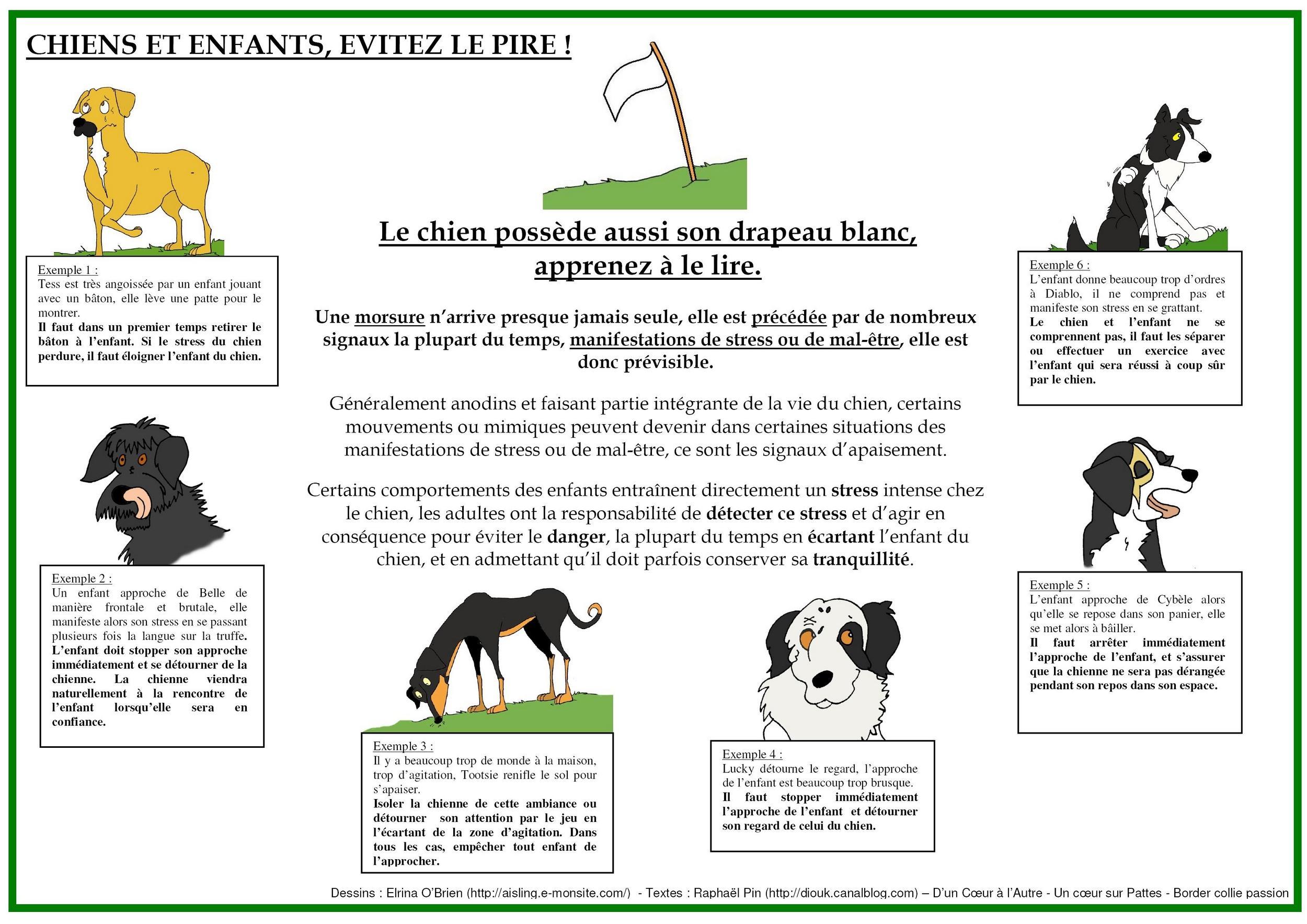 collier - présentation de JUSS, chien traumatisé  88053473739974