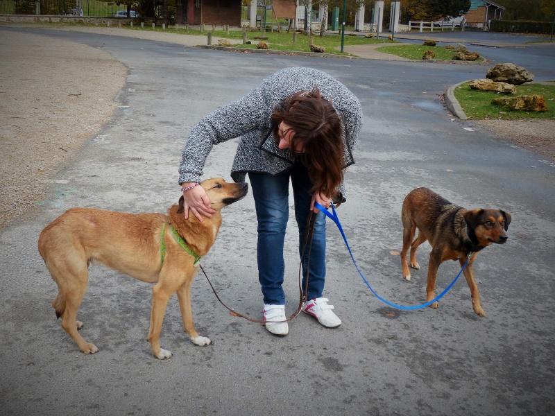 Tzupy, chien de notre quartier, mâle très sociable, né en 2009. 884593P1130329
