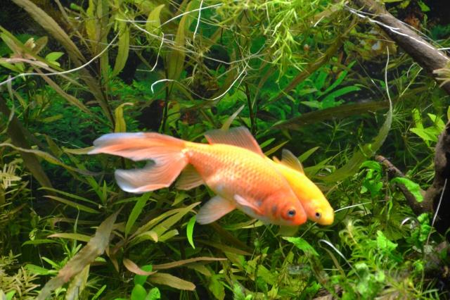 Je vous présente mon aquarium! =D 886051MesPRS
