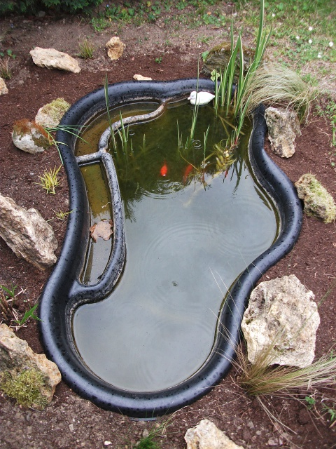 Nouveau petit bassin francilien 897513DSCF6358