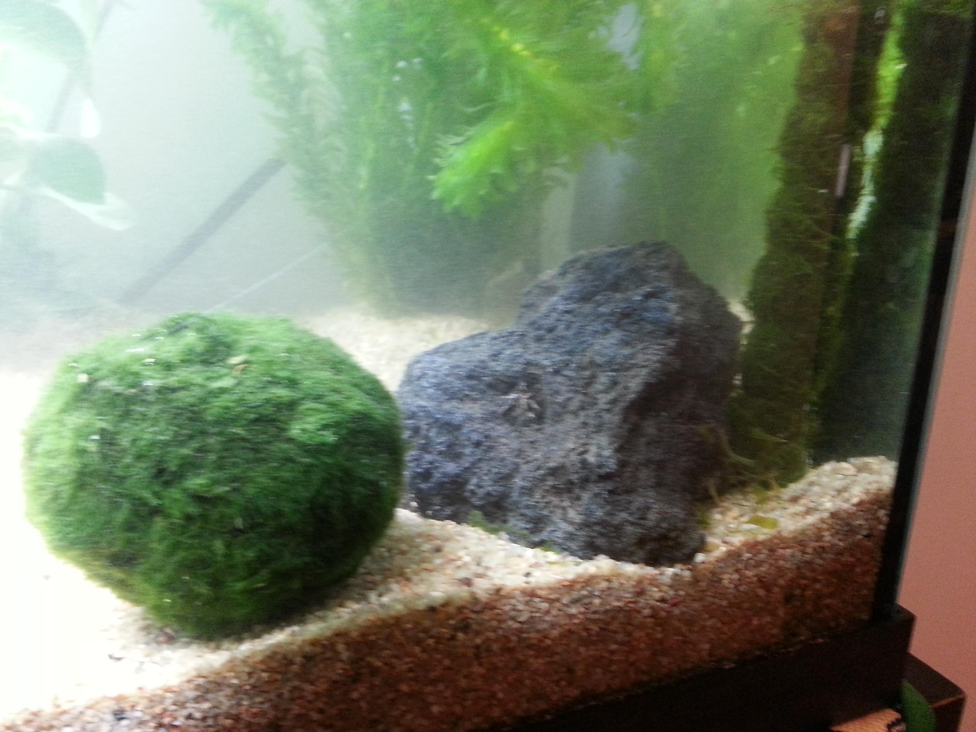 plante dans un aquarium 89854120130613003143