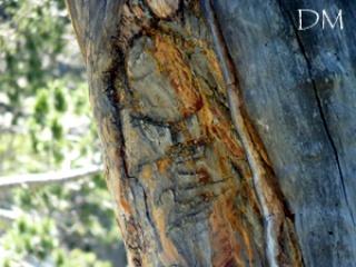 L'esprit des arbres 900327arbre2