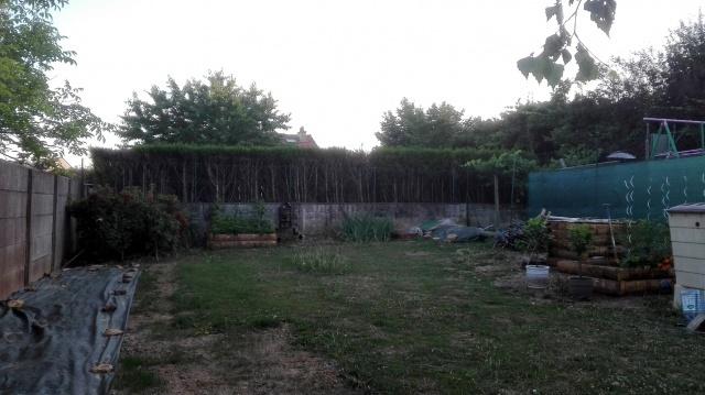 Recherche arbre pour mon jardin - Page 3 902053IMG20170623212746