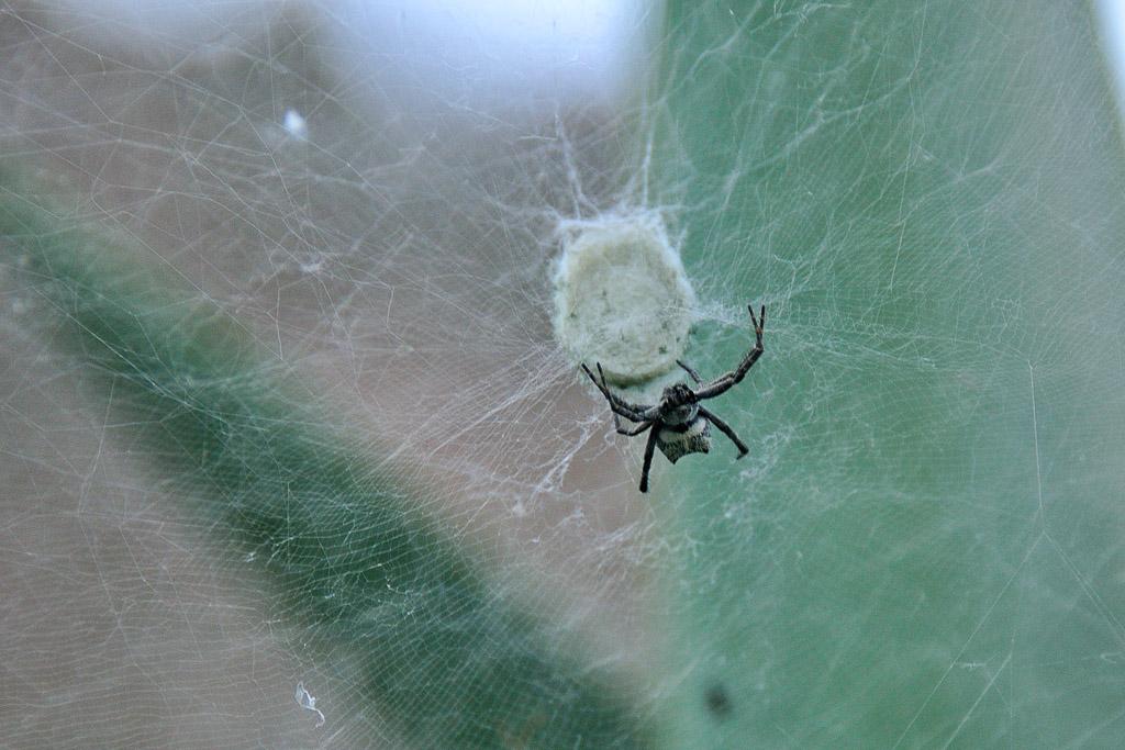 (FIL OUVERT à tous) vous aimez les araignées? 902469DSC80261311111727112