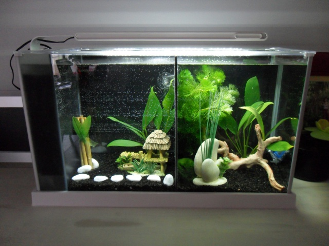 Nano aquarium Fluval Spec V 19L [mise en eau] 906985SAM1824