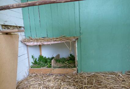 Quelques modèles de pondoirs pour nos poules 910702pondoirIn