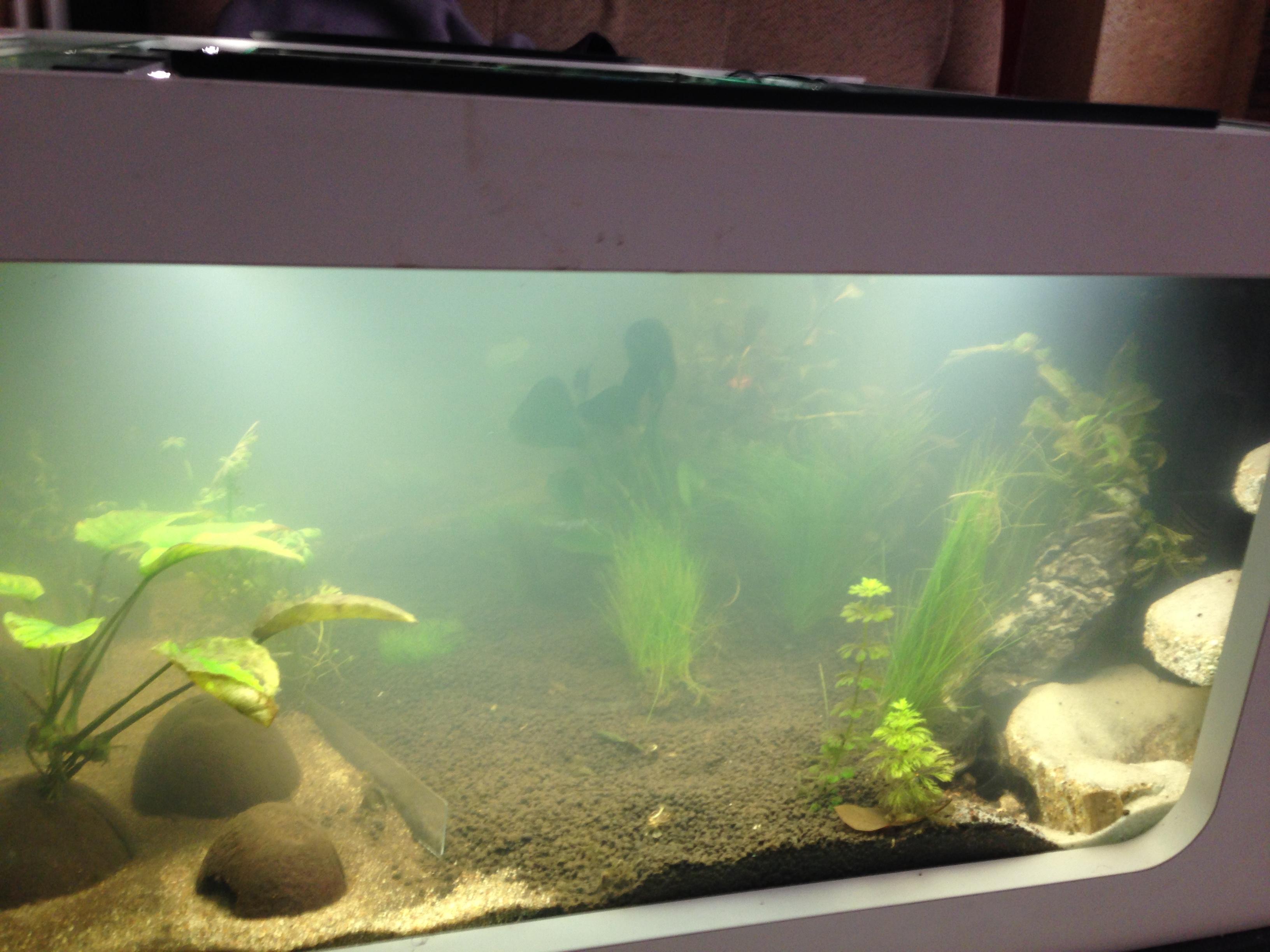 Mesures incohérentes et algues brunes 911757IMG02431