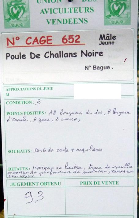 Poule de Challans - standard 914645P1120305