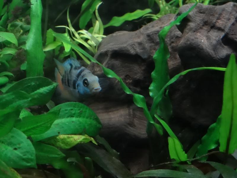 Ma Fish'étagère et les autres  - Page 3 915750DSC06987
