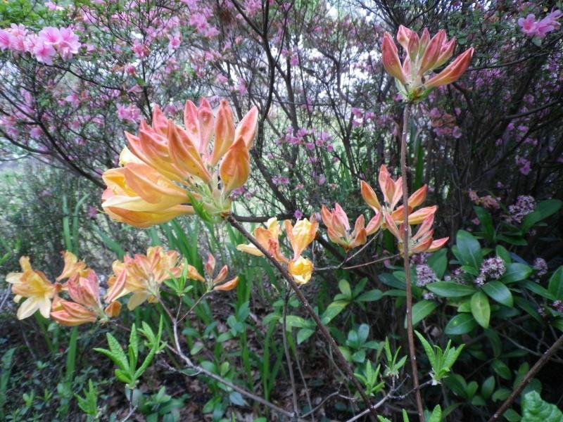 avril, jardin fébrile - Page 3 920715IMGP3993