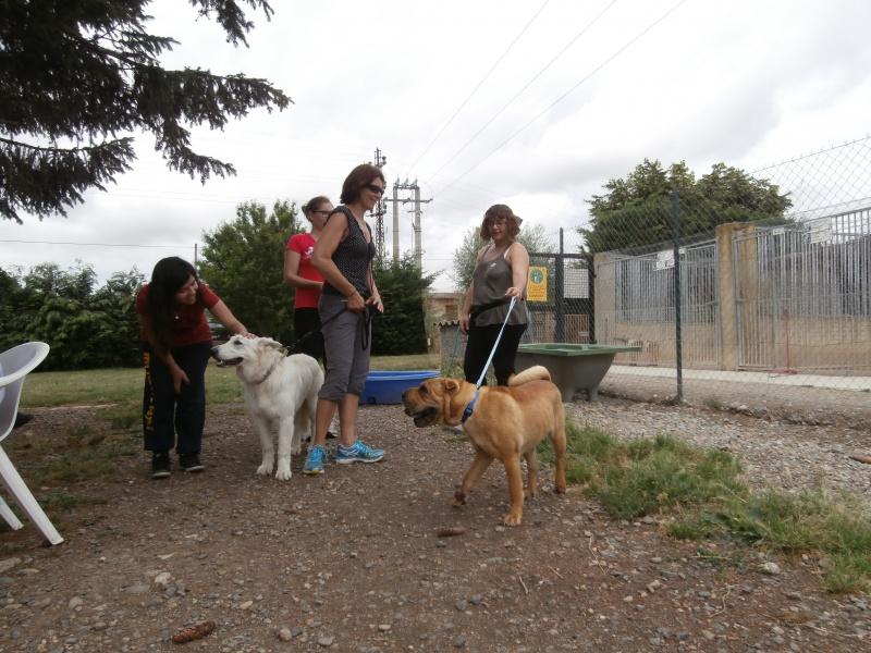 Rando' chien, seconde édition! 921601P6142759