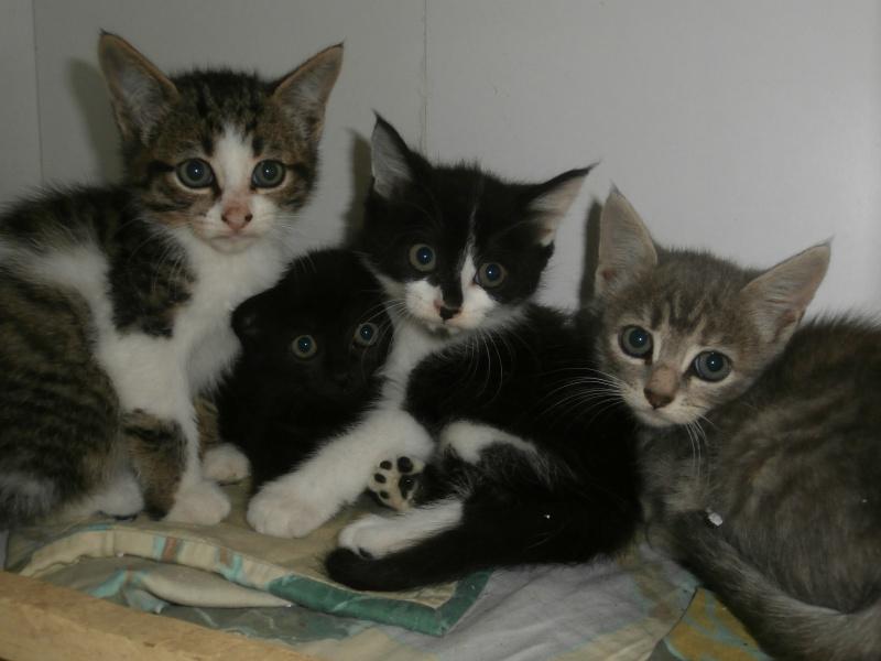 SUN (chaton mâle noir et blanc) 923775P9131692