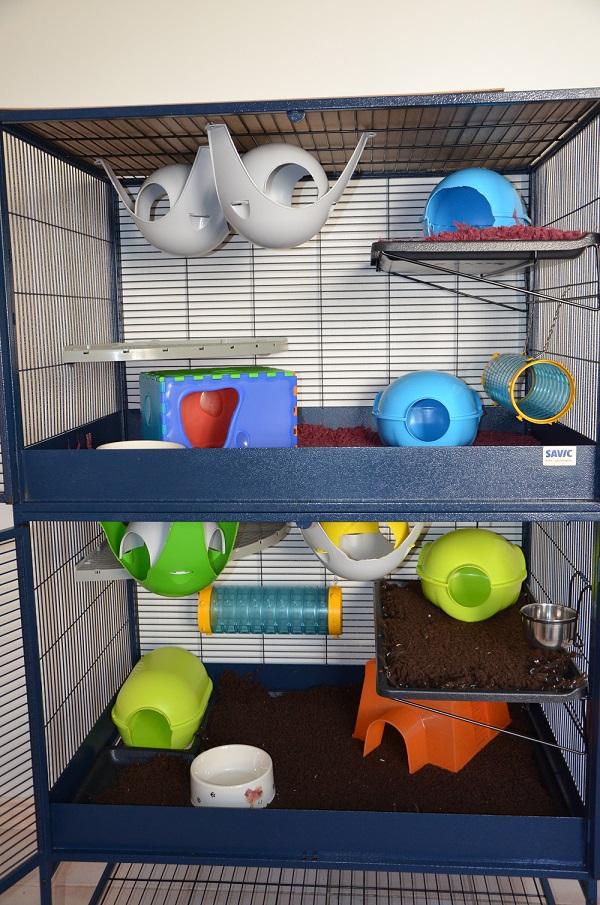 Photos de vos cages 927493DSC4111