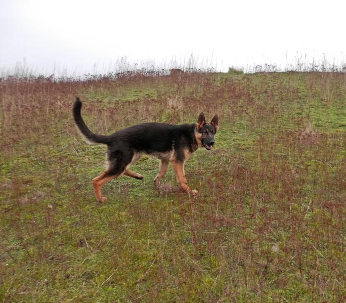 Photo de vos chien noir et beige! - Page 2 935545858165P1020073