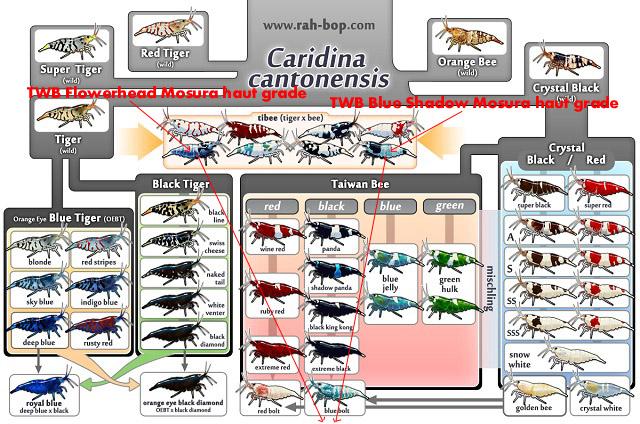 Nouveau bac à crevettes version aquascaping - Page 2 938016Sanstitre1