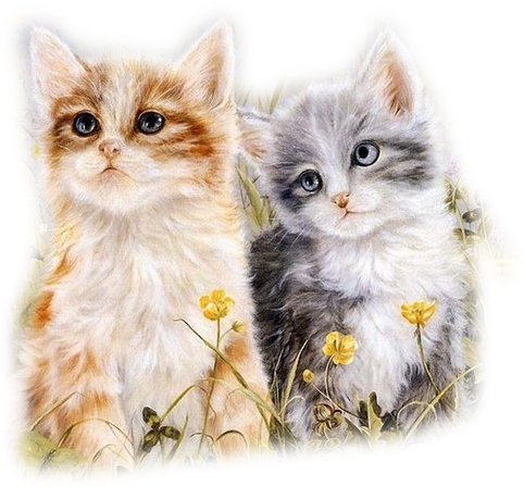 Mes tubages Chats 939453TubMel30