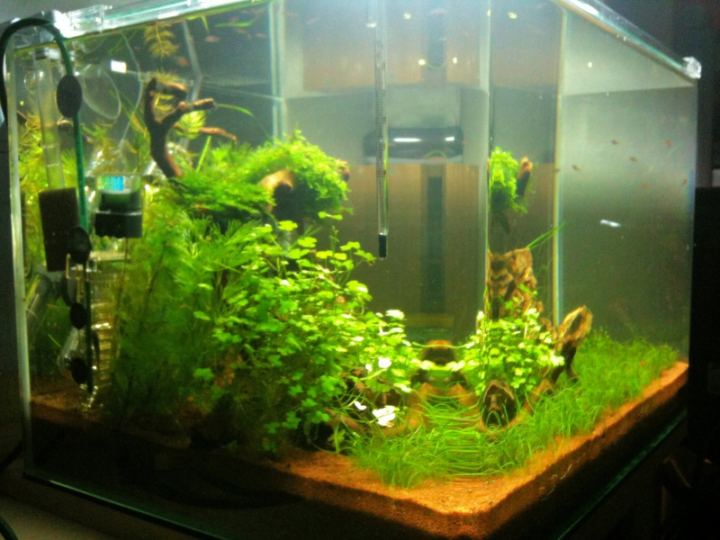 Mon Scaper's Tank 50L Aquascaping 944138IMG0336