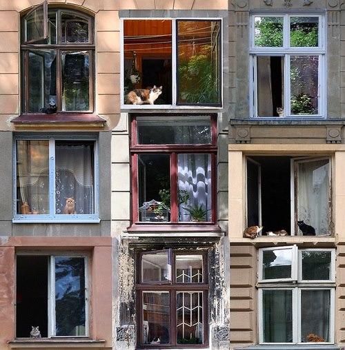 Des fenêtres d'hier et d'aujourd'hui. - Page 5 9455255267434499406917304682060319510n