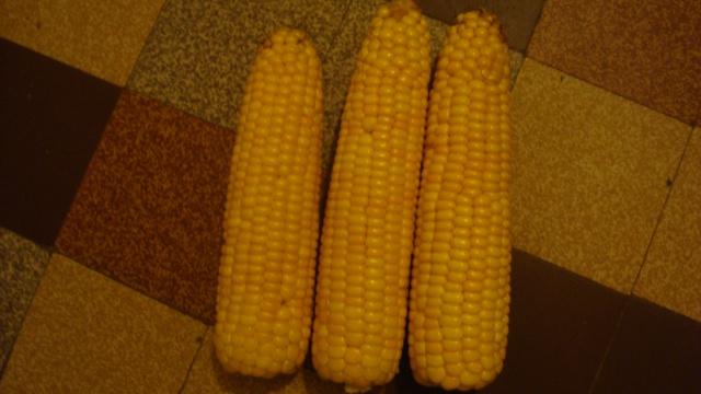 Maïs grain le marché en Berne !!!!!!!!!!!! - Page 3 945727DSC04464