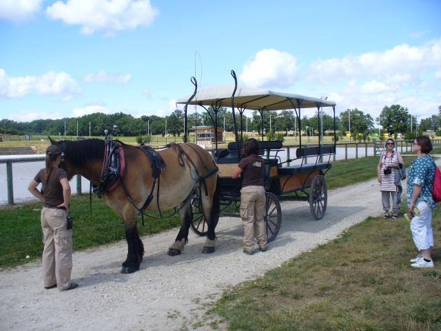 Les roulottes du berry + le pôle du cheval et de l'ane(18) 951722P1060455