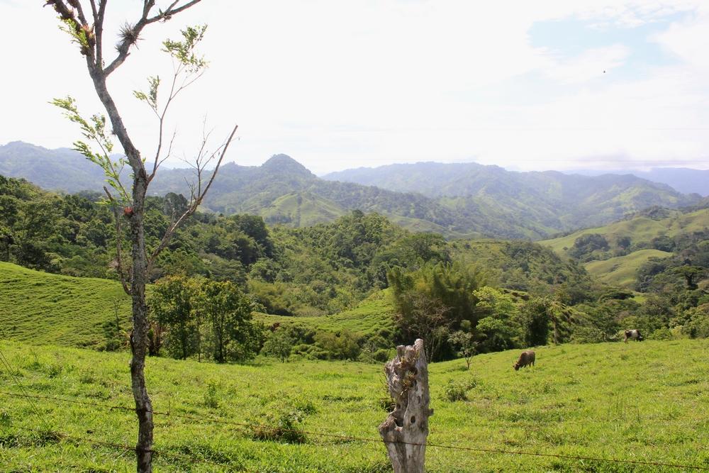 15 jours dans la jungle du Costa Rica 956547costa1r