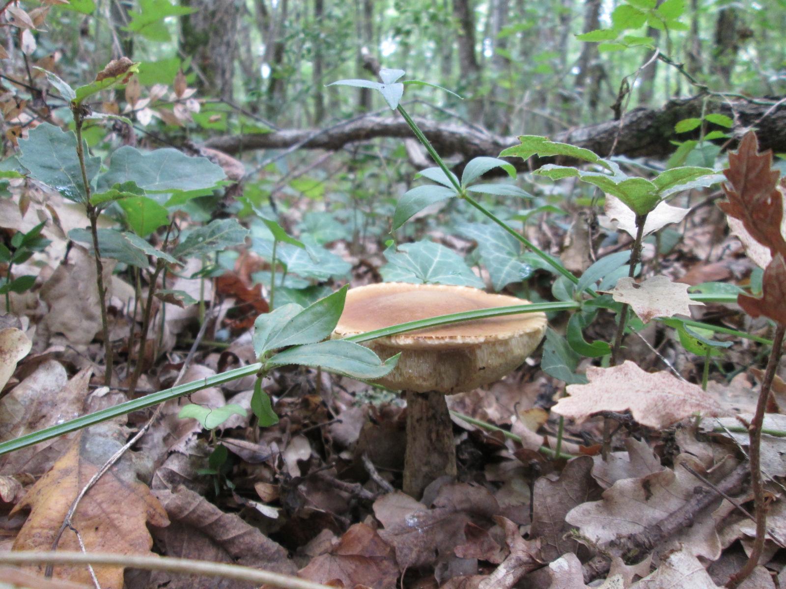 [fil ouvert] la forêt dans tous ses états 957540IMG1330