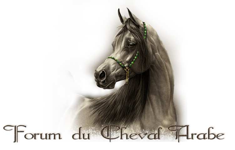 FORUM sur le cheval Arabe