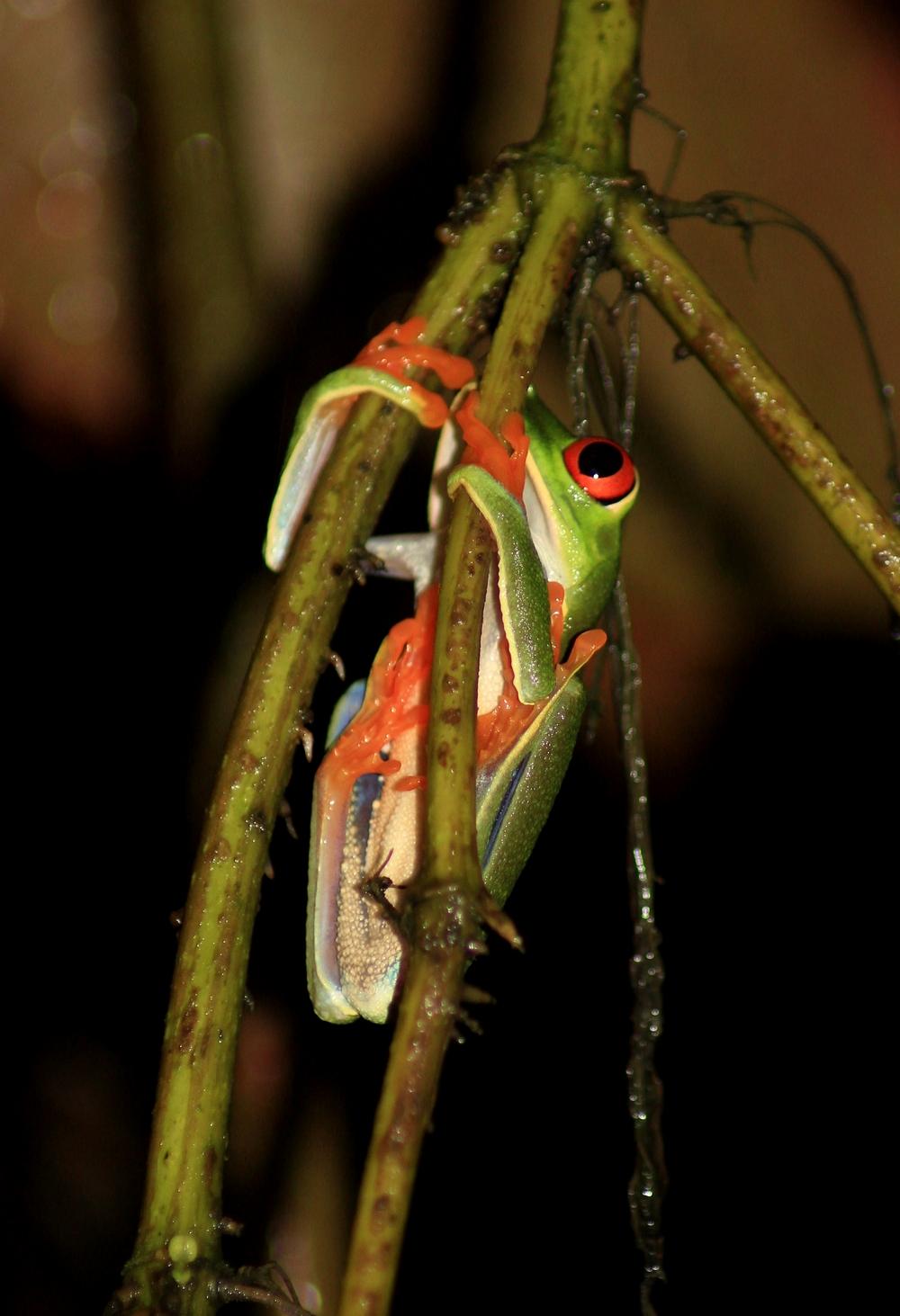 15 jours dans la jungle du Costa Rica 959733aga5r