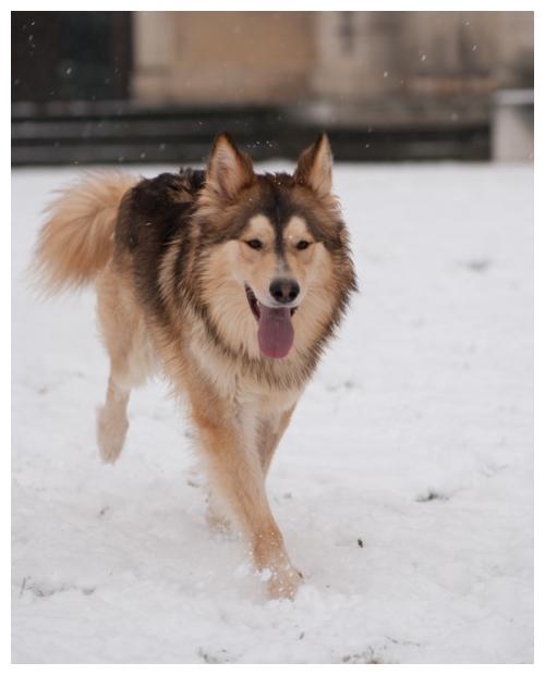 Nos loups grandissent, postez nous vos photos - Page 9 963390DSC4954640x480
