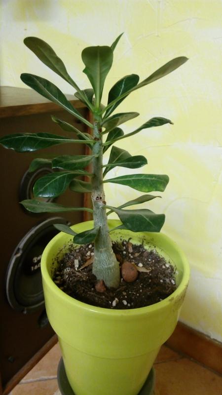 Les plantes de Creasweetcandy  963545IMG20151118211221