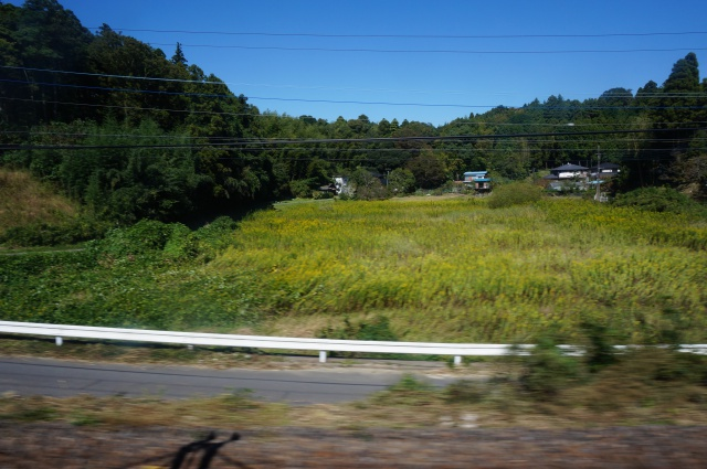 gaijin - Gaijin in Japan: Tokyo - Kyoto - Osaka [Terminé] 964248DSC01006