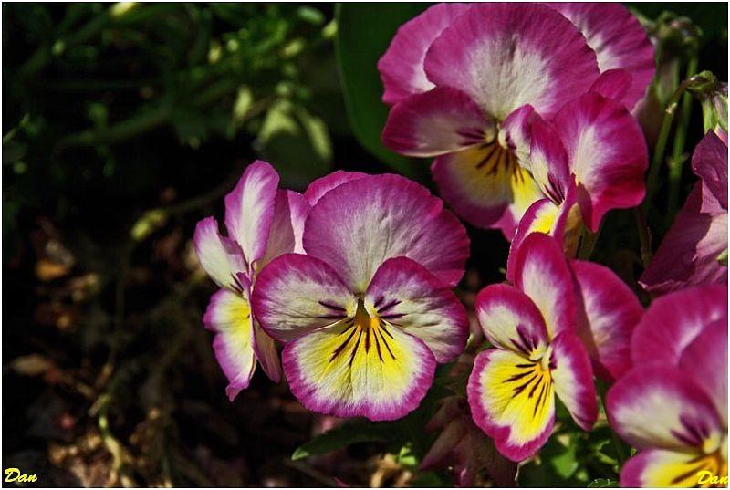 Les fleurs, plus belles les unes que les autres... 968919IMGP7173