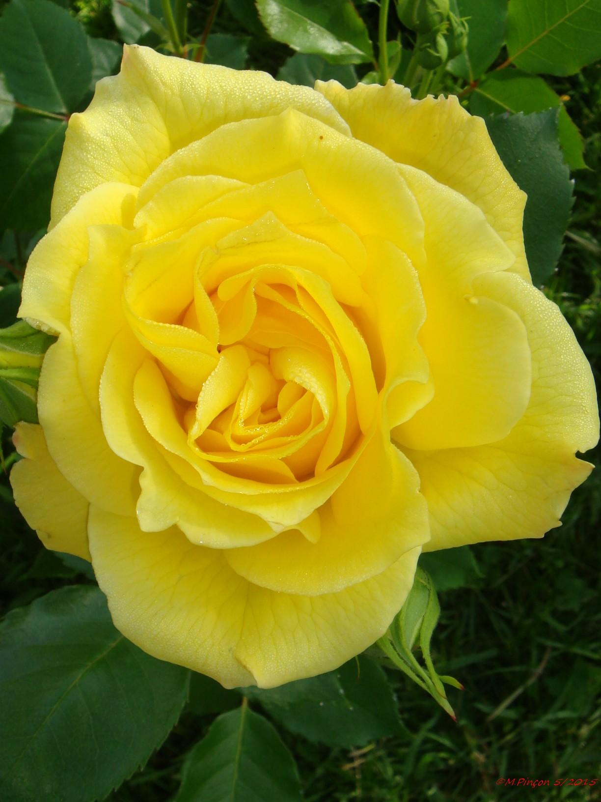 [Fil Ouvert] Fleurs 981126DSC07956