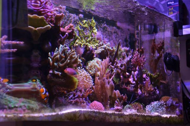 Mon premier aquarium eau de mer - Page 5 984083201508252