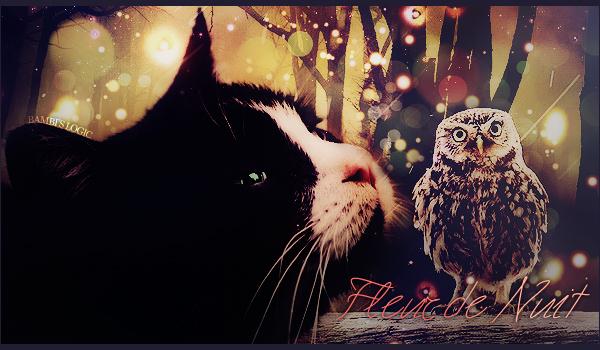 Boule de Soleil - chaton du Clan du Tonnerre 984638fleurdenui2t