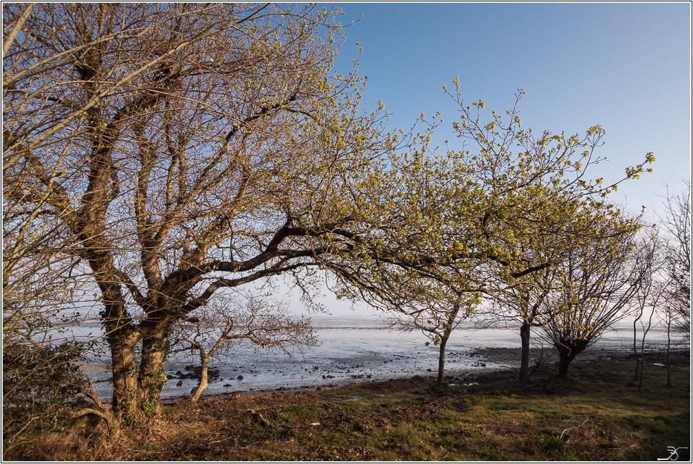 Morbihan, Le Duer, sentier cotier 986884LR6P3180014
